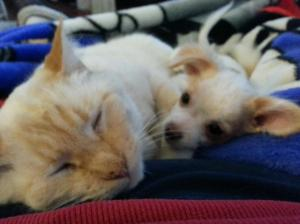 Snuggles & Yuki